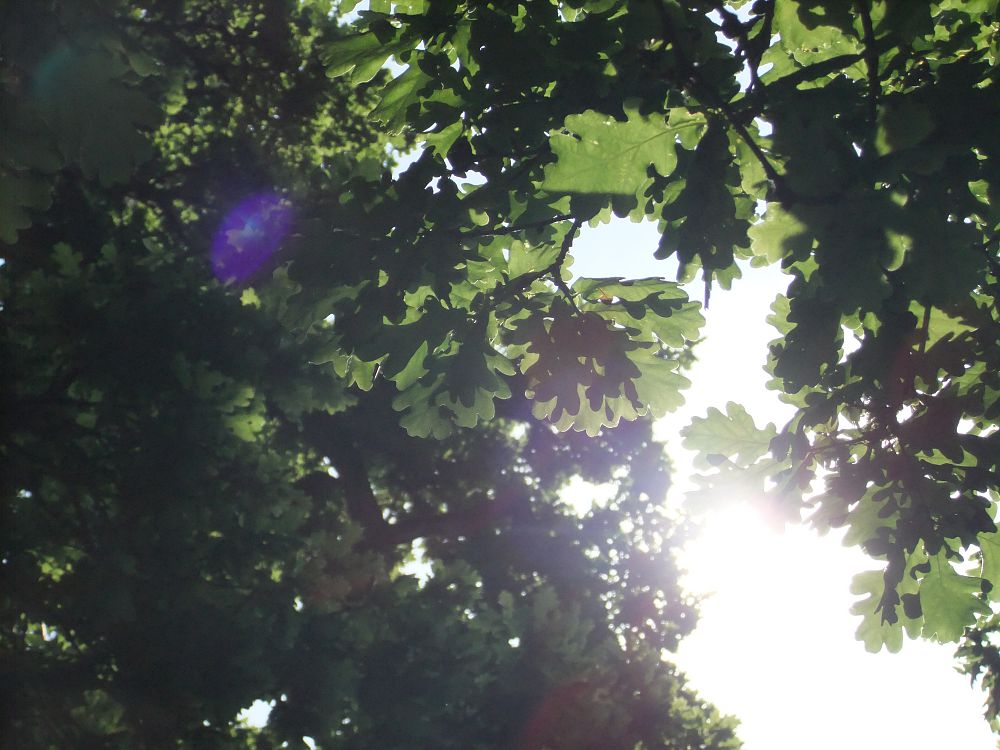 Sun Dazzling